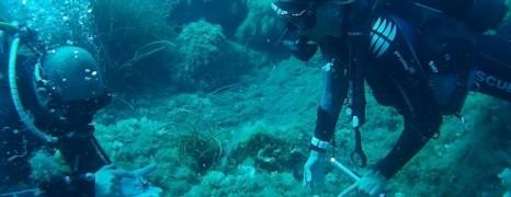 Sardegna, da single, in vacanza, sott'acqua!